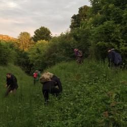 Searching at dusk for larvae. Photo by Ed Turner.