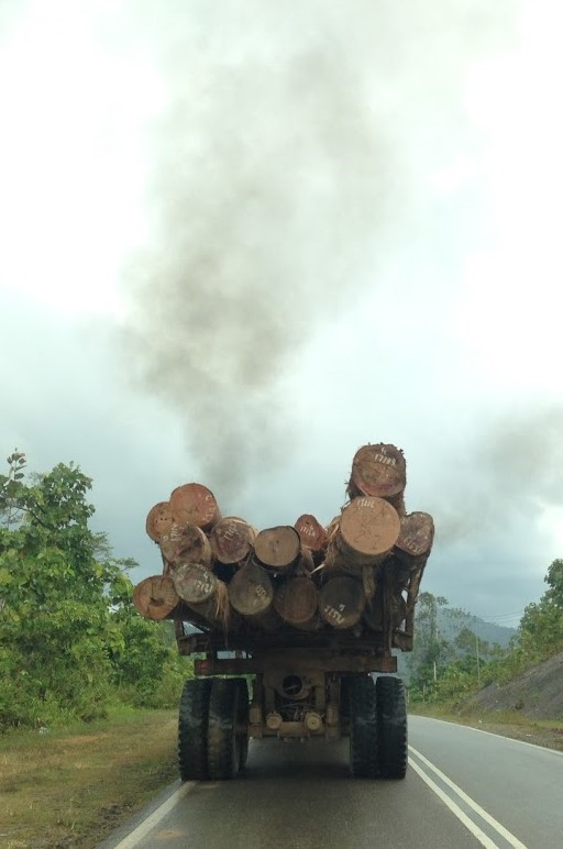 A truck carries the trunks of dipterocarp trees away from logging operations in lowland rainforest in Sabah, Malaysian Borneo (copyright Tom Fayle)