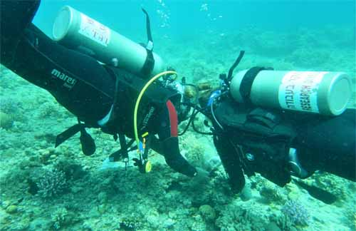 Maddie Emms and a colleague catching damselfish in front of the Inter-University Institute for Marine Sciences in the Gulf of Aqaba, Red Sea
