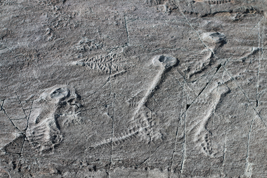 Photo of Ediacaran fossils