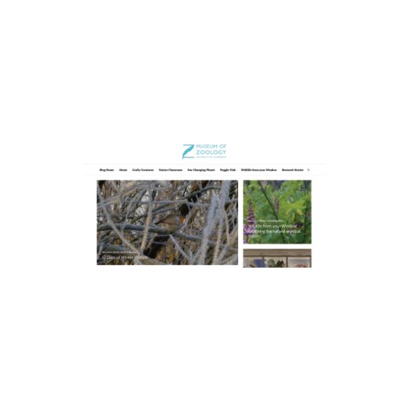 Screenshot of the University Museum of Zoology Cambridge blog's homepage
