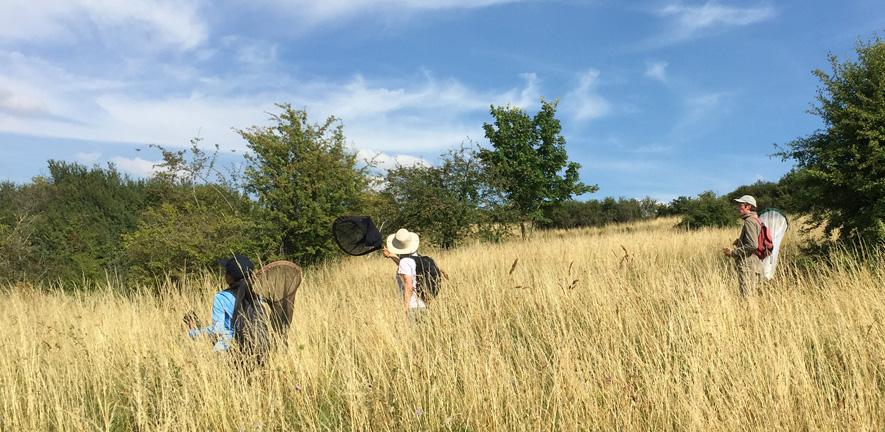 Researchers searching for butterflies on a blue sky day