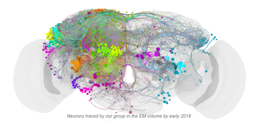 Neurons traced by our group by early 2018
